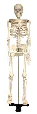 Tisch-Skelett