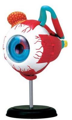 4D-Puzzle - Auge