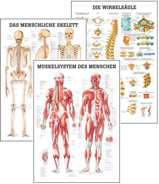 anatomische lehrtafel, skelett