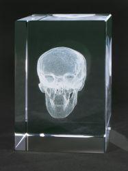 Kostbarkeiten aus Glas - Schädel