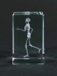 Kostbarkeiten aus Glas - Skelett