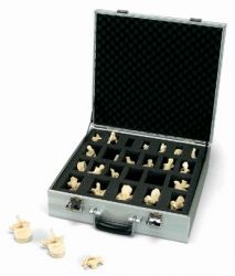 3B-Scientific® BONElike Set mit 24 Wirbeln