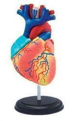 4D-Puzzle - Herz